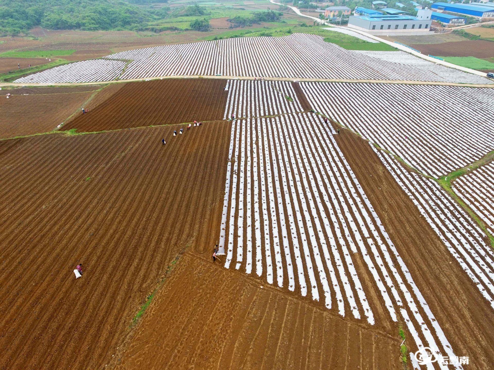福泉陸坪:打造壩區產業 助力脫貧攻堅