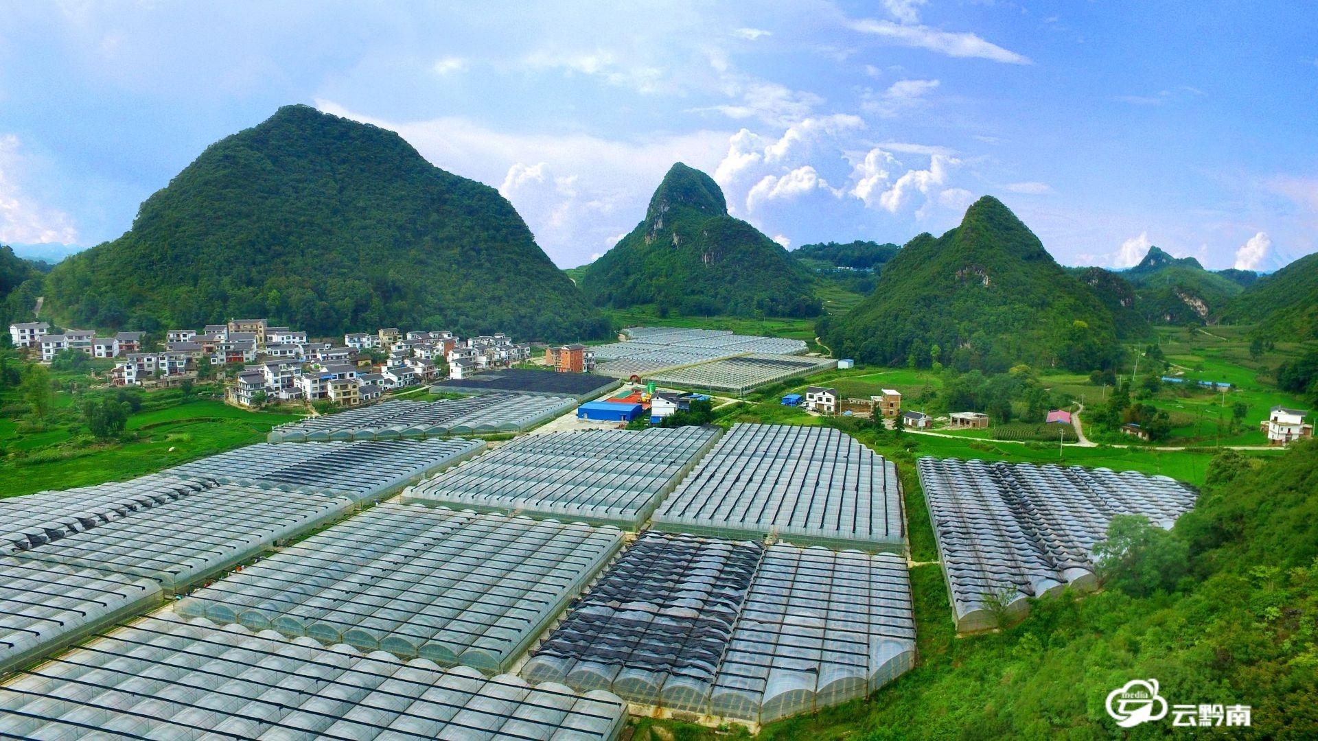 特色农业激活农村经济一池春水——黔南州农业现代化发展掠影